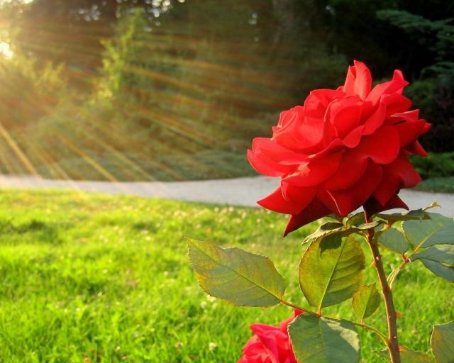 sun_rose